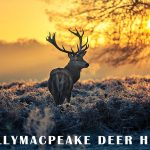 Deer Hunt from Shane's Castle to Ballymacpeake