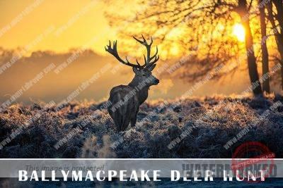 Deer hunt across Irish townlands in 1949
