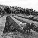 Ballymena Ploughing Match